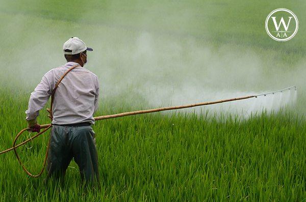 WAA ação contra uso do DDT