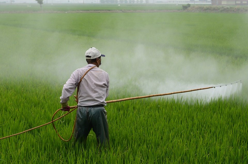 WAA contra DDT